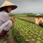 Agriculteurs au Vietnam
