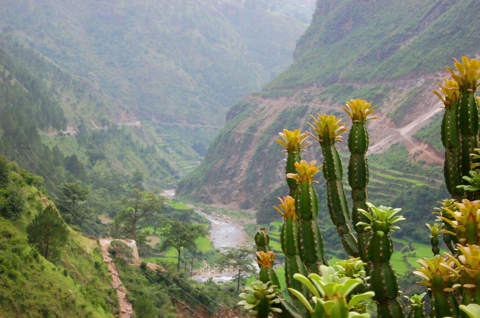 Garwhal, la vallée des fleurs, Inde
