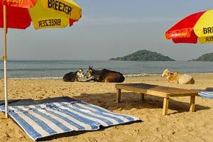 Voyage organisé en petit groupe - Goa Palolem - Inde - Agence de voyage Les Routes du Monde