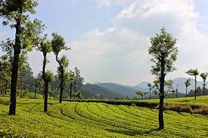 Voyage organisé en petit groupe - Munnar Kerala - Inde du sud - Agence de voyage Les Routes du Monde
