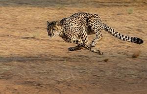Voyage sur mesure - Okonjima - Namibie - Agence de voyage Les Routes du Monde