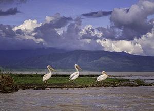Voyage organisé en petit groupe - parc faunique Nesh Sar - Éthiopie du sud - Agence de voyage Les Routes du Monde