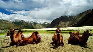 Voyage organisé sur mesure - Vallée de Nubra Ladakh - Inde du nord - Agence de voyage Les Routes du Monde