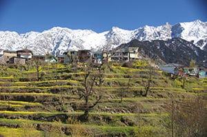 Voyage organisé sur mesure - Dharamsala - Inde du nord - Agence de voyage Les Routes du Monde