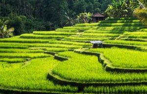 Jatiluwih, Bali, Indonesie - Les Routes du Monde