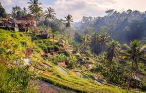 Voyage organisé en petit groupe - Tegallalang - Bali - Indonésie - Agence de voyage Les Routes du Monde