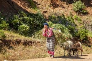 Voyage organisé en petit groupe - Atlas - Maroc - Agence de voyage Les Routes du Monde