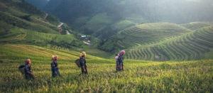 Voyage organisé en petit groupe - rizières - Vietnam - Agence de voyage Les Routes du Monde