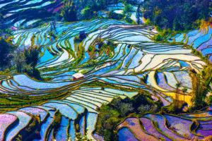 Voyage organisé en petit groupe - Yuan Yang - Chine - Agence de voyage Les Routes du Monde
