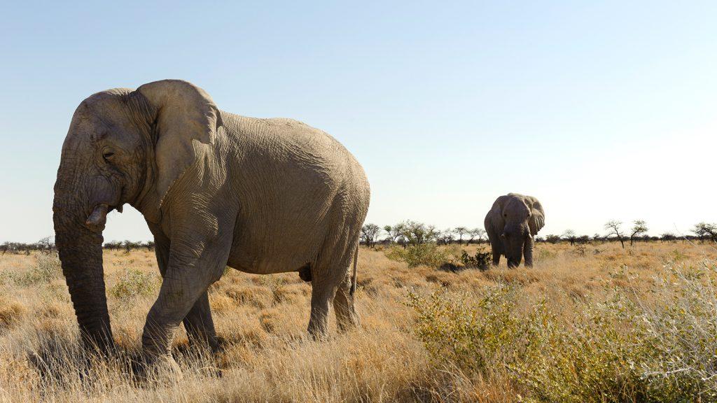 Voyage organisé en petit groupe - safari - Namibie - Agence de voyage Les Routes du Monde