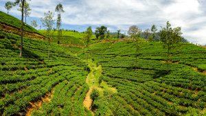 Voyage organisé en petit groupe - Sri Lanka - Agence de voyage Les Routes du Monde