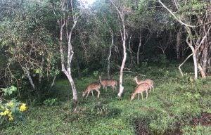 Voyage organisé en petit groupe - Wilpattu park - Sri Lanka - Agence de voyage Les Routes du Monde