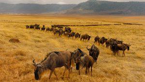 Parc Serengeti, Tanzanie