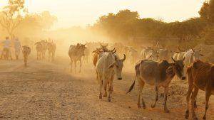 Voyage organisé en petit groupe - Rajasthan - Inde - Agence de voyage Les Routes du Monde