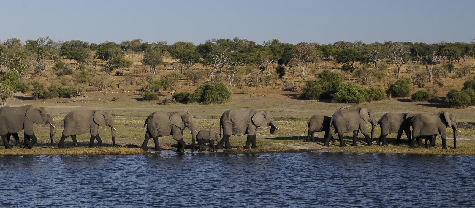 Éléphants à Chobe, Botswana - les Routes du Monde