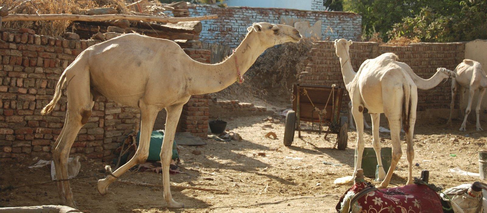 Voyage organisé en petit groupe - rive gauche Luxor - Egypte - Agence de voyage Les Routes du Monde