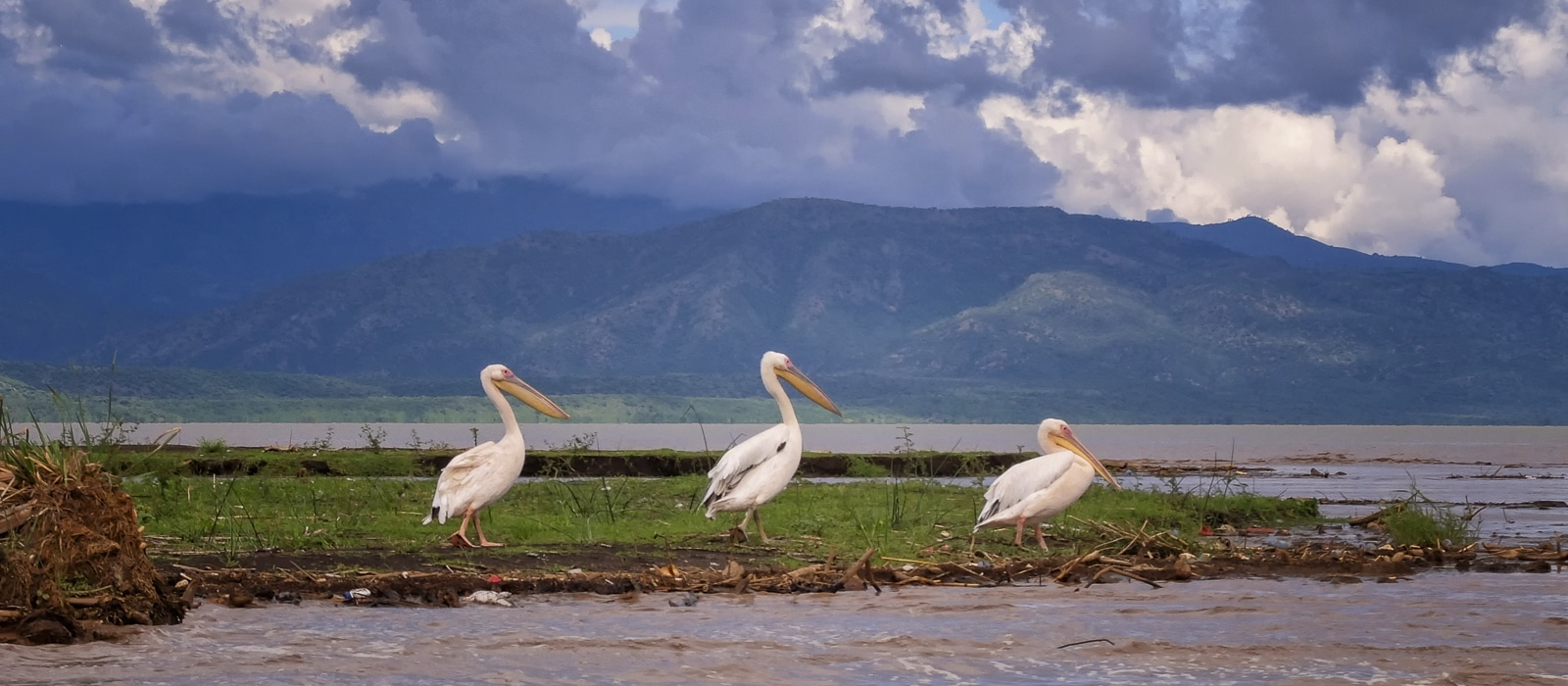 Voyage organisé en petit groupe - parc faunique Nesh Sar - Éthiopie - Agence de voyage Les Routes du Monde