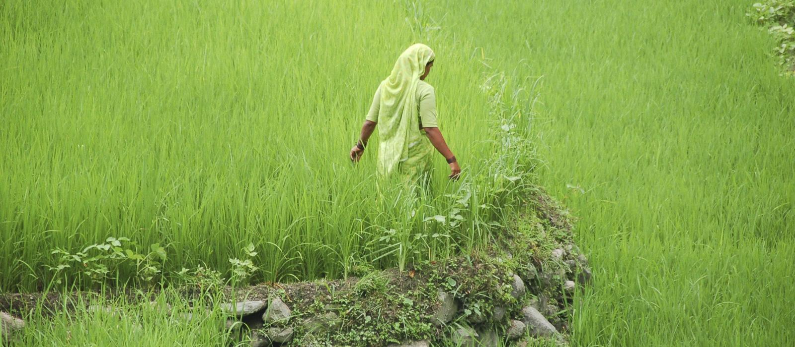 Voyage organisé sur mesure - Garhwal- Inde du nord - Agence de voyage Les Routes du Monde