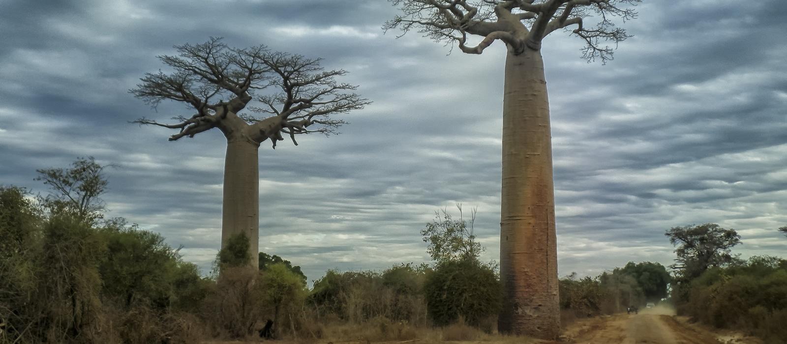 img-diapo-entete - Madagascar-1600x700-13.jpg