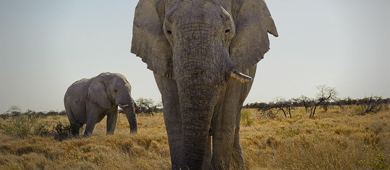 Voyage organisé en petit groupe - Éléphants à Étosha - Namibie - Agence de voyage Les Routes du Monde