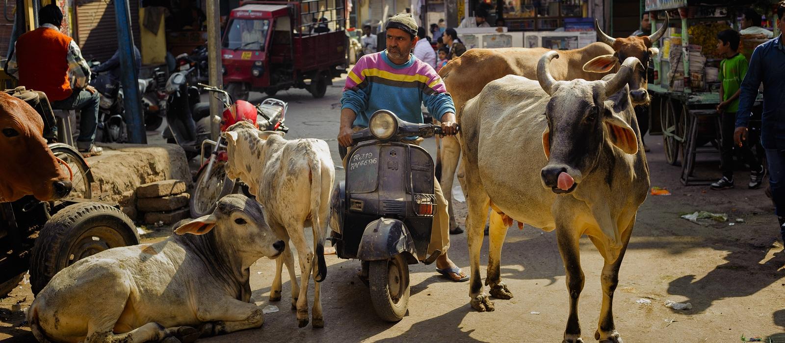 img-diapo-entete - Rajasthan-1600x700-8.jpg