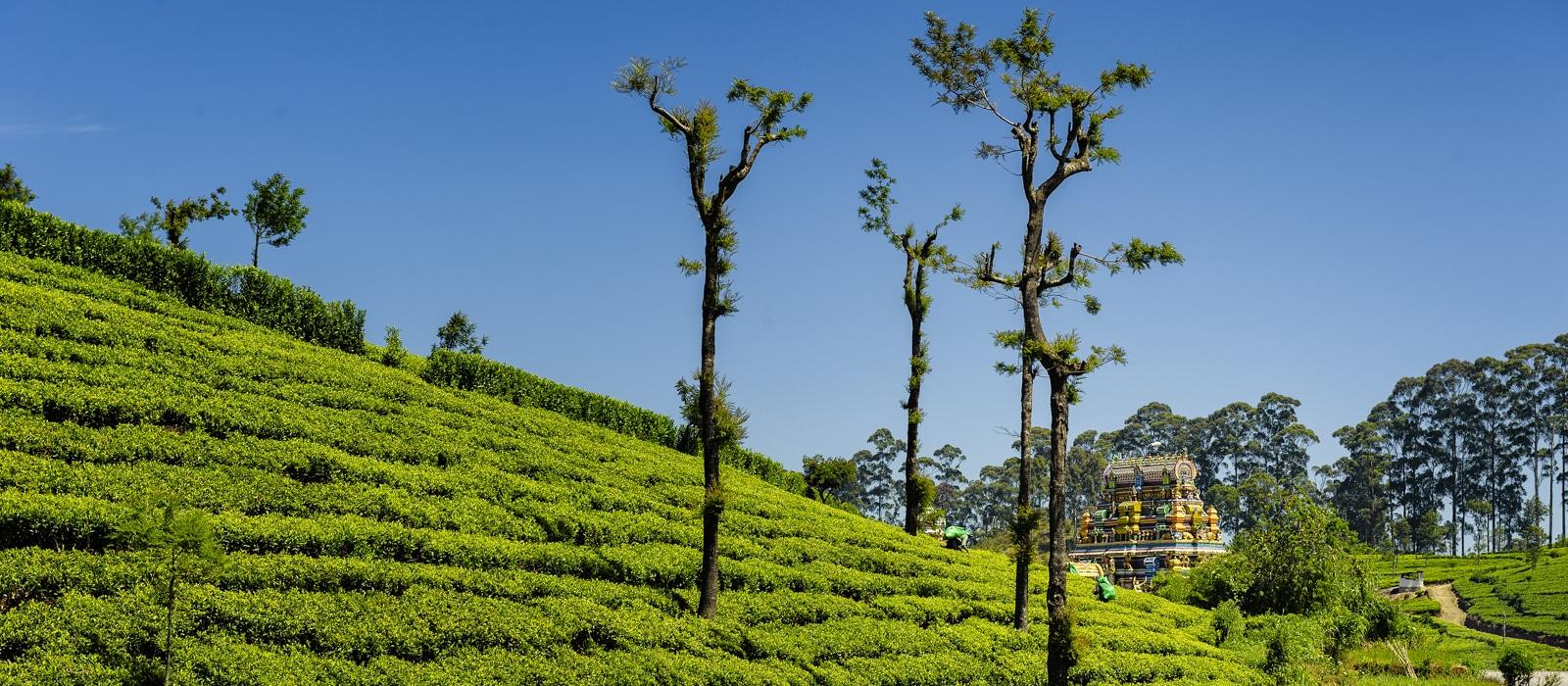 img-diapo-entete - Sri-Lanka-1600x700-7.jpg