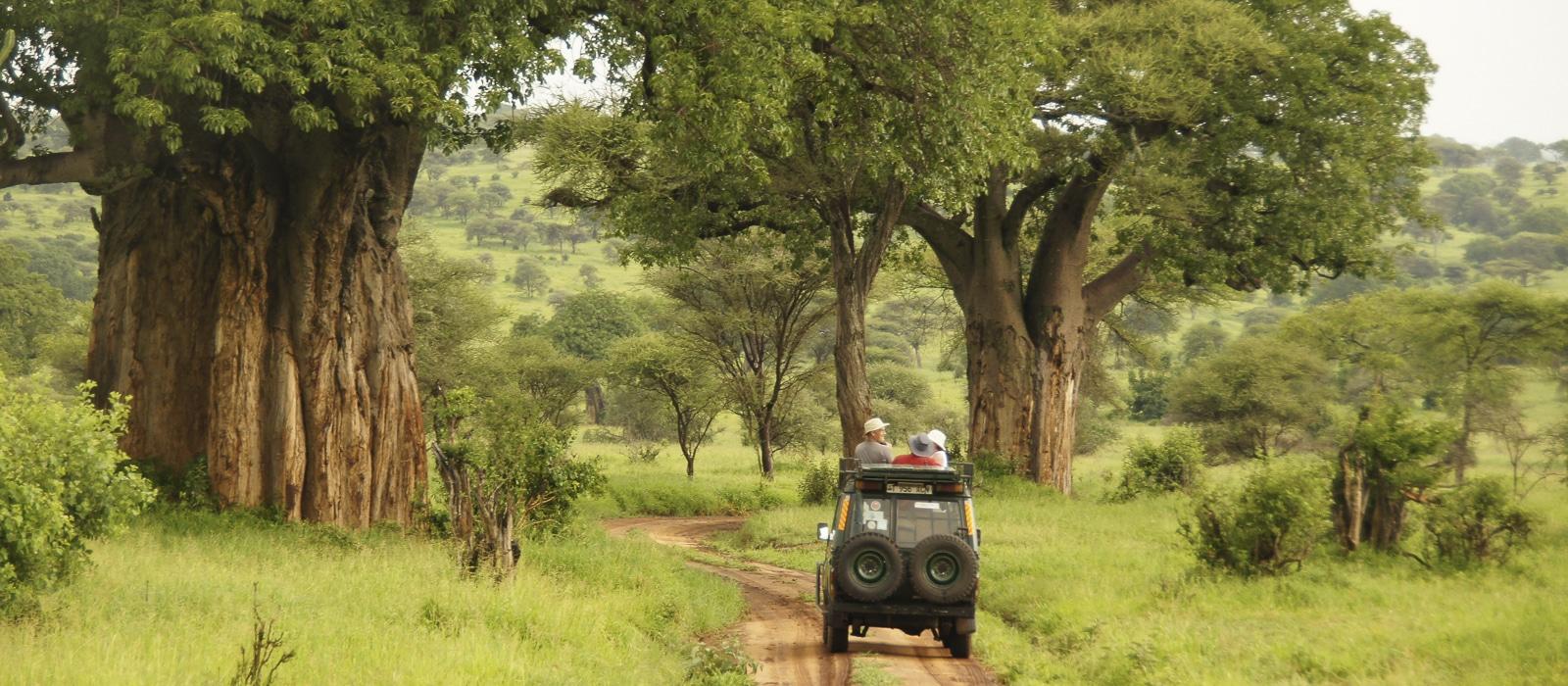 Voyage organisé en petit groupe - Parc Tarangire baobabs - Tanzanie - Agence de voyage Les Routes du Monde