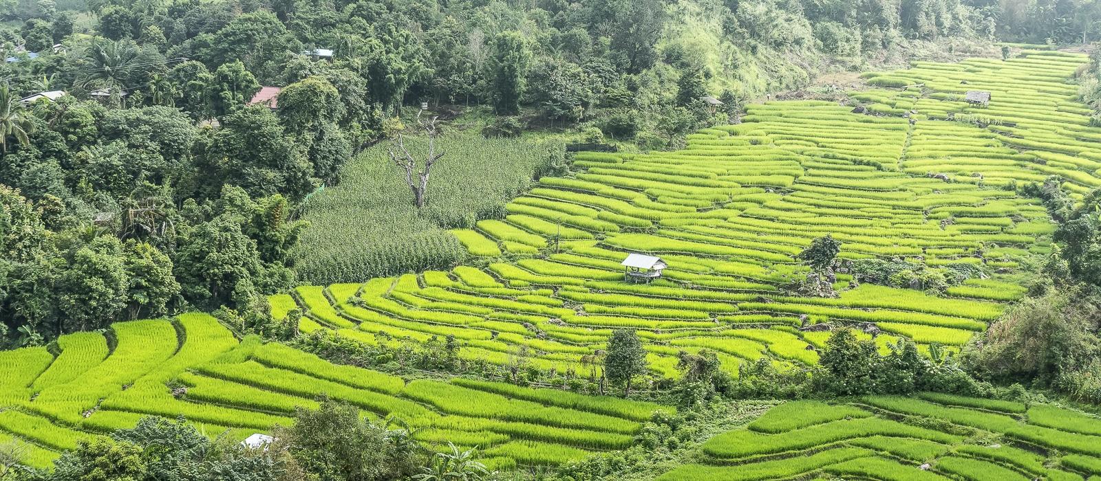 img-diapo-entete - thailande-1600x700-18.jpg