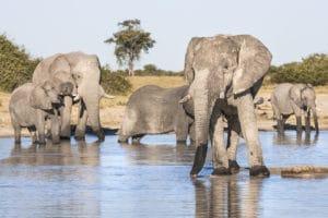 Éléphants, Chobe, Botswana - les Routes du Monde