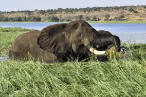 Voyage organisé en petit groupe - Éléphants à Chobe - Botswana - Agence de voyage Les Routes du Monde