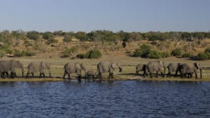 img-diapo-tab - Botswana-1600x900-17.jpg