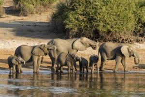 img-diapo-tab - Botswana-1600x900-21.jpg