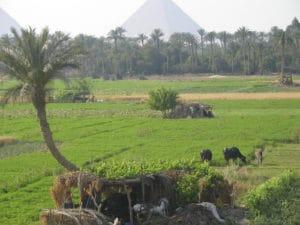 Voyage organisé en petit groupe - la pyramide de Kheops - Egypte - Agence de voyage Les Routes du Monde