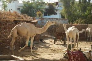 Voyage organisé en petit groupe - Luxor - Egypte - Agence de voyage Les Routes du Monde