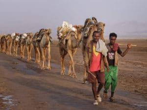 Voyage organisé en petit groupe - peuple Afar Danakil - Éthiopie - Agence de voyage Les Routes du Monde