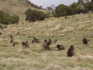 Voyage organisé en petit groupe - parc faunique Simien - Éthiopie du nord - Agence de voyage Les Routes du Monde