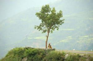Voyage organisé sur mesure - rizières Garhwal - Inde du nord - Agence de voyage Les Routes du Monde