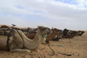 img-diapo-tab - Maroc-1600x600-17.jpg