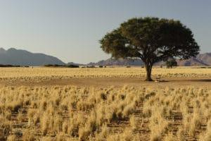 img-diapo-tab - Namibie-1600x900.jpg