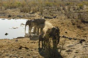 Voyage sur mesure -Etosha - Namibie - Agence de voyage Les Routes du Monde