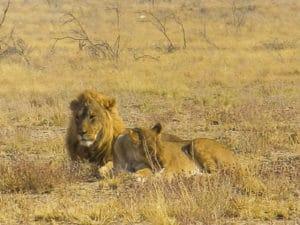 iVoyage sur mesure - Etosha - Namibie - Agence de voyage Les Routes du Monde