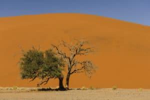Voyage organisé en petit groupe - Sossusvlei - Namibie - Agence de voyage Les Routes du Monde