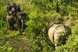 Voyage organisé en petit groupe - rhinocéros Chitwan - Népal - Agence de voyage Les Routes du Monde