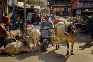 img-diapo-tab - Rajasthan-1600x900-12.jpg