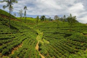 img-diapo-tab - Sri-Lanka-1600x900-19.jpg