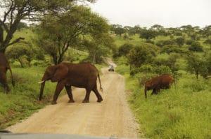 Voyage organisé en petit groupe - Parc Tarangire éléphants - Tanzanie - Agence de voyage Les Routes du Monde