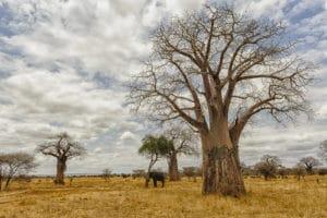 Voyage organisé en petit groupe - Parc Tarangire - Tanzanie - Agence de voyage Les Routes du Monde