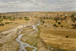 Voyage organisé en petit groupe - Parc Serengeti migration - Tanzanie - Agence de voyage Les Routes du Monde