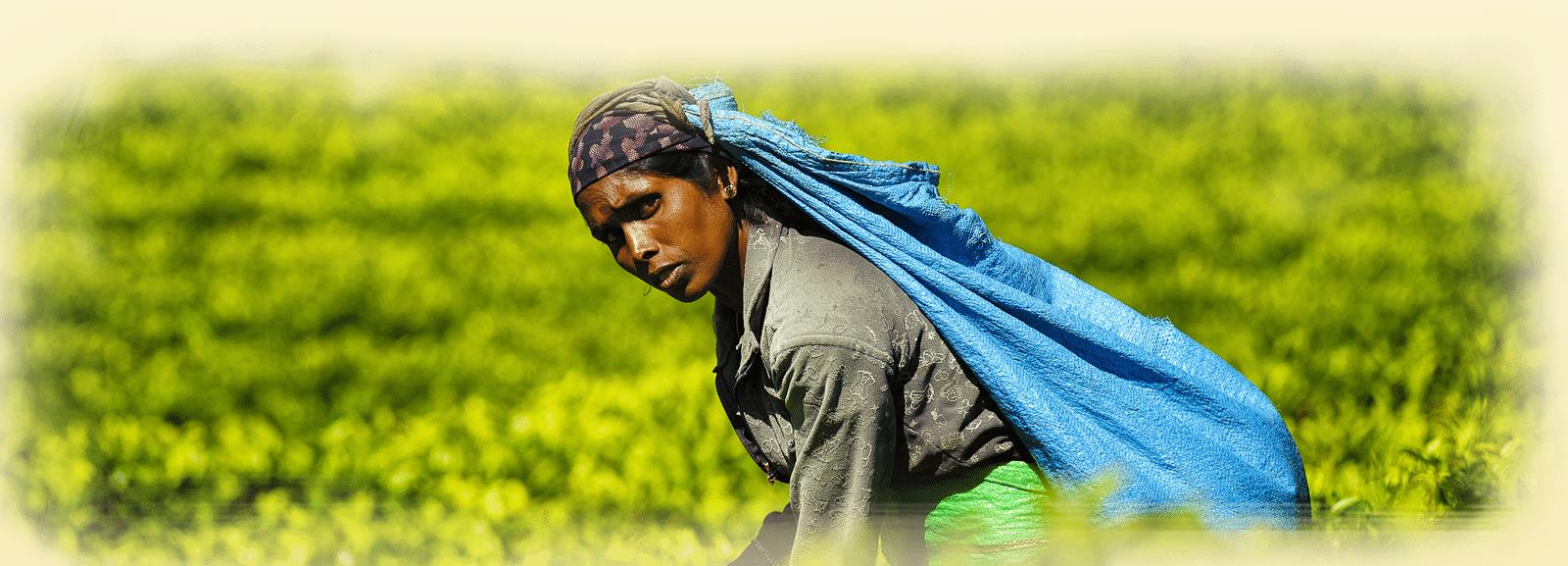 img-piedpage - img-piedpage-srilanka.png