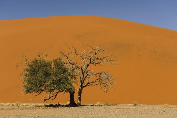 Voyage sur mesure - Sossusvlei - Namibie - Agence de voyage Les Routes du Monde